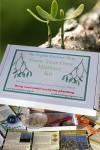 Mistletoe Grow Kit