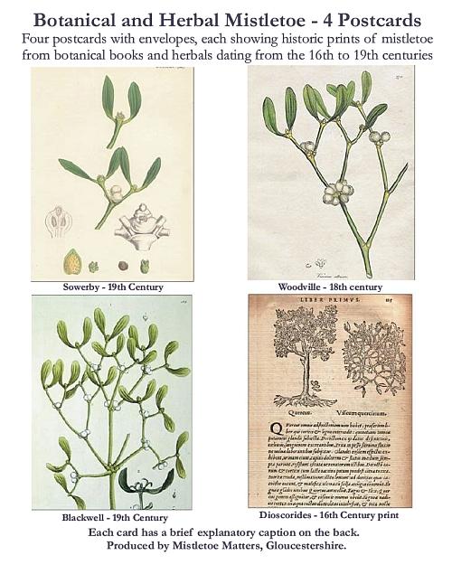 Botanical Mistletoe Postcard Set