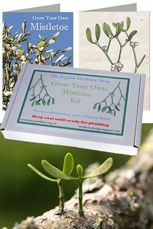 Mistletoe Grow-Kits and Grow-Kit Gift Cards